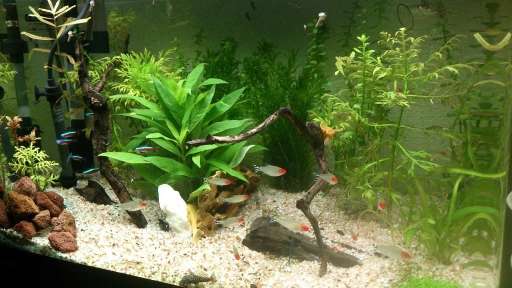 かわいい熱帯魚達をゆっくり眺めてのんびり癒されてください(^^)